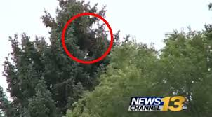 fugitive hides out in colorado tree for 5 hours ny daily news
