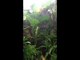 my rainforest terrarium setup youtube