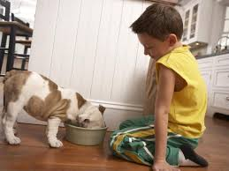 Dogs On Laminate Floors What Are The Best Floors For Dogs Absolutely Rugs Area Rugs