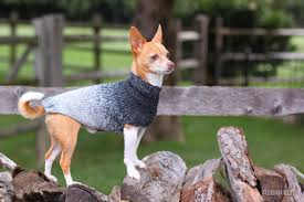 that s my boy collection chihuahua sweater chihuahua