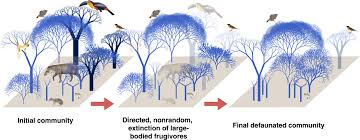 loss of big animals reduces forests carbon storing capacity