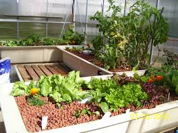 aquaponic gardening with fish home outdoor decoration