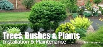 Bushes For Landscaping Landscape Bushes And Shrubs Mreza Club