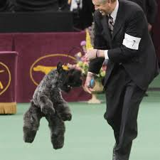 affenpinscher won westminster westminster dog show the blade