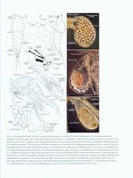 cuisine atlas catalogue atlas of crustacean larvae joel w martin jørgen olesen jens t