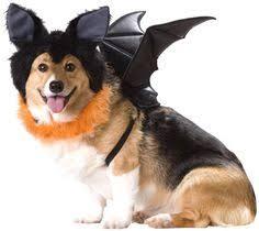 Dog Halloween Costumes Large Dog Halloween Costumes Dog Stuff Large Dog