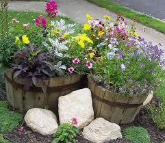 Half Barrel Planters by Wine Barrel Planter Container Gardening Pinterest Wine