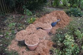 my annual post on how to plant bulbs in containers u2013 gardeninacity