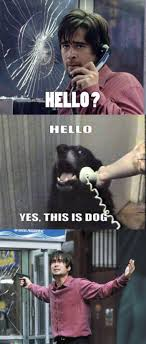Dog On Phone Meme - best of hello this is dog pics smosh