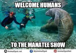 Manatee Meme - manatee memes images manatees pinterest manatee funny animal