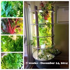 indoor garden grown in calgary canada grow your food indoors