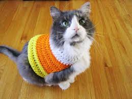 Halloween Costumes Cats 85 Pet Costumes Patterns Ideas Images Pet
