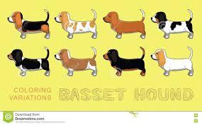 dog basset hound coloring variations vector illustration stock