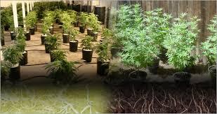 chambre de culture hydroponique chambre culture cannabis 145344 culture hydroponique vs culture en
