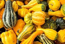 how to grow ornamental gourds planet