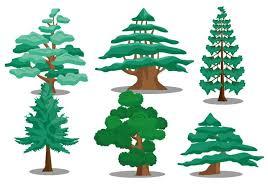 cedar tree vectors free vector stock graphics images