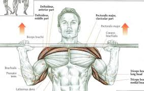decline bench press muscles bench press and inclines which one and why far beyond strength