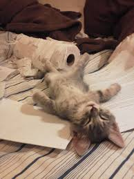 in order to function properly a paper shredder needs to rest for