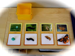 the helpful garden insect lore life cycle matching activities and