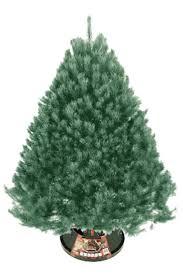 scotch pine christmas tree scotch pine christmas tree in omaha nebraska fresh cut christmas