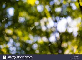 Forest Backdrop Abstract Background Of Green Forest Bokeh Blurry Forest Backdrop