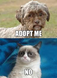 Adoption Meme - dog with human face needs adoption grumpy cat know your meme