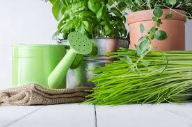 Herb Garden Winter - growing an indoor herb garden this winter simplified rentals