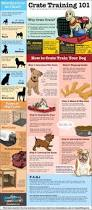 Good Backyard Pets 200 Best Pets Images On Pinterest Backyard Dog Area Cat Room