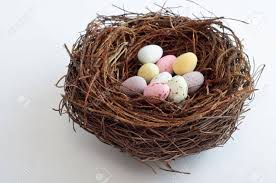 easter facts trivia photo collection nest eggs easter