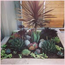 native plants los angeles simply succulents a water wise landscaping solution for los
