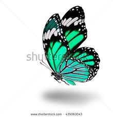 fascinated flying light green butterfly wings stock photo