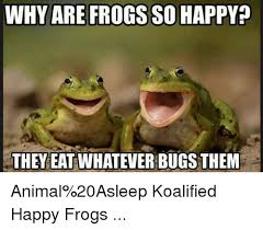 Funny Frog Meme - 25 best memes about happy frog happy frog memes