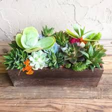 succulent centerpiece rustic wood trough