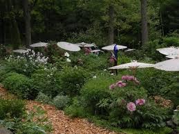landscape design with peonies u2013 cricket hill garden