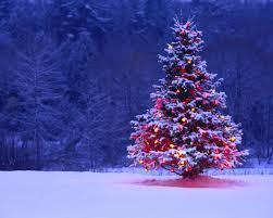 shining christmas tree in snow wallpaper winning download