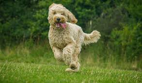 hyperactive dogs 5 ways to train a hyperactive dog to calm down top dog tips