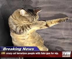 Breaking News Meme - 79 best breaking news images on pinterest funny images funny