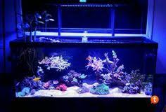 Floating Aquascape Reef2reef Saltwater And Reef Aquarium Forum - let u0027s see those 125 gallon aquascapes reef central online