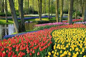 netherland u0027s flower route is the real heaven on earth u2013 wow amazing