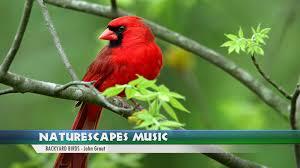 backyard birds john grout naturescapes music youtube