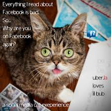 Lil Bub Meme - lil bub meme generator 182 best images about grumpy cat on