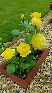 pin by doris lea on southern gardens pinterest flowers