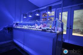led lights for coral tanks apogonreeffeature amazing for such a small minimalist setup