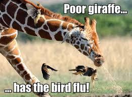 Sneeze Meme - meme images giraffe sneeze hd wallpaper and background photos