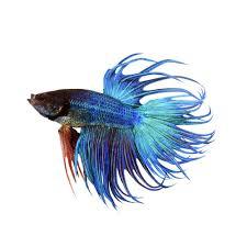 Bill Gates Aquarium In House by Fish Store Live Pet Aquarium Fish Petco