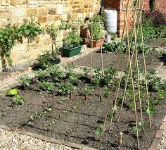 how to start vegetable garden best idea garden