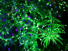 Outdoor Christmas Decorations For Sale by Outdoor Laser Lights For Sale Home Design Ideas And Pictures