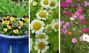 15 low maintenance plants that require little gardening work