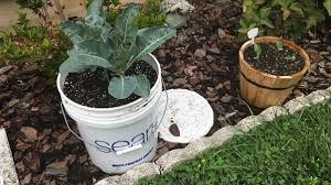what are some tips on gardening for beginners quora