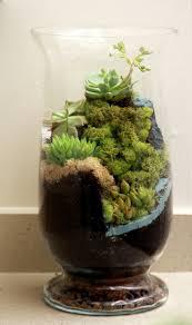 468 best terrariums images on pinterest terrarium ideas fairies